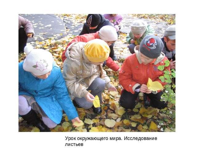 Урок окружающего мира. Исследование листьев