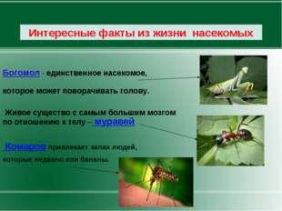 Богомол - единственное насекомое, которое может поворачивать голову. Живое с