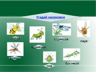 Угадай насекомое пчела стрекоза паук комар кузнечик тля богомол