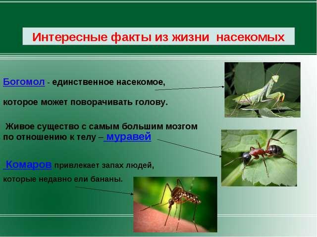 Богомол - единственное насекомое, которое может поворачивать голову. Живое с...