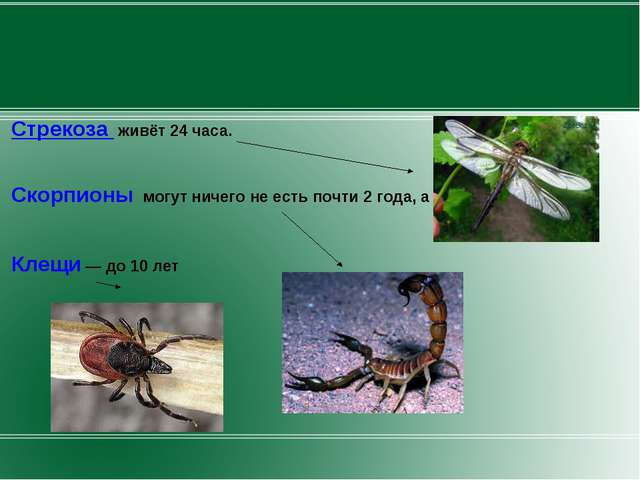Стрекоза живёт 24 часа. Скорпионы могут ничего не есть почти 2 года, а Клещи...