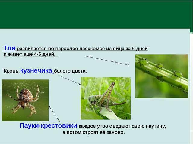 Пауки-крестовики каждое утро съедают свою паутину, а потом строят её заново....
