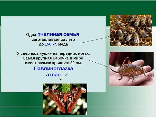 Одна пчелиная семья заготавливает за лето до 150 кг. мёда У сверчков «уши» на...