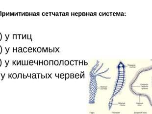 6. Примитивная сетчатая нервная система: а) у птиц б) у насекомых в) у кишечн