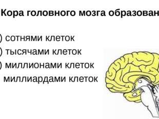 7. Кора головного мозга образована: а) сотнями клеток б) тысячами клеток в) м