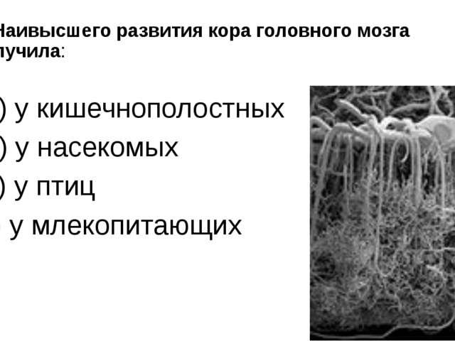 9. Наивысшего развития кора головного мозга получила: а) у кишечнополостных б...