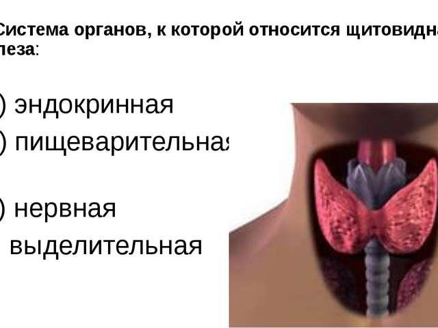 2. Система органов, к которой относится щитовидная железа: а) эндокринная б)...