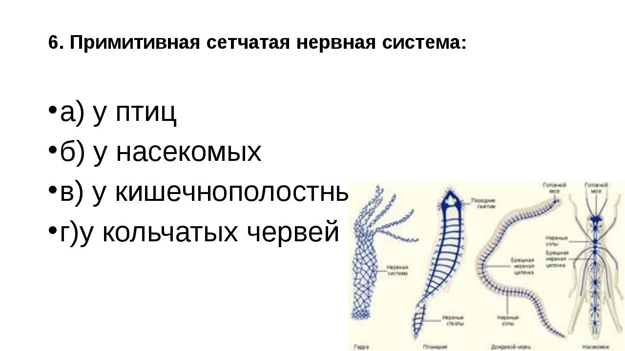 6. Примитивная сетчатая нервная система: а) у птиц б) у насекомых в) у кишечн...