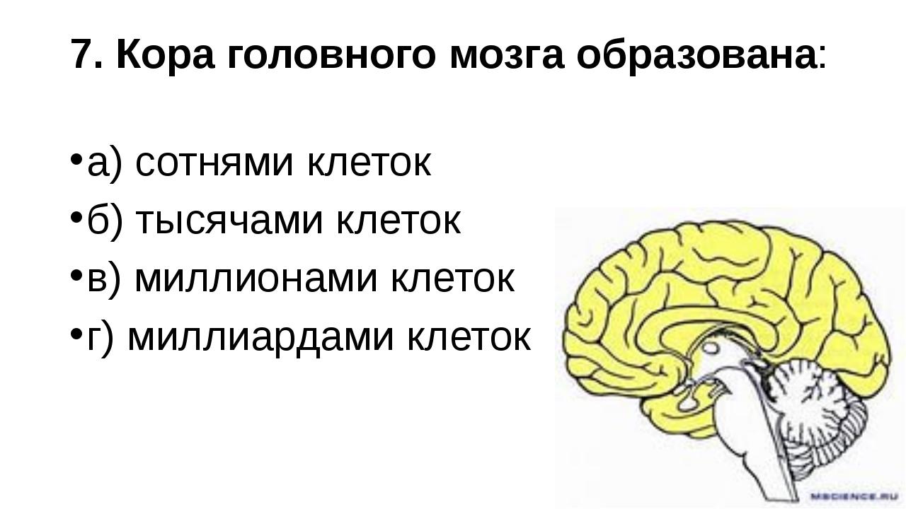 7. Кора головного мозга образована: а) сотнями клеток б) тысячами клеток в) м...