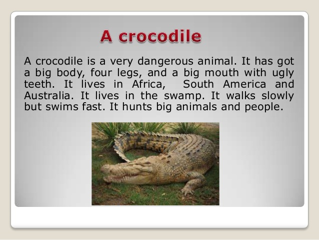 http://image.slidesharecdn.com/random-140407120031-phpapp02/95/wild-animals-7-638.jpg?cb=1396890071