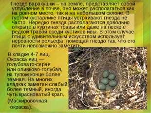 Гнездо варакушки – на земле, представляет собой углубление в почве, оно може