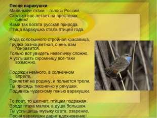 Песня варакушки Маленькие птахи – голоса России, Сколько вас летает на прост
