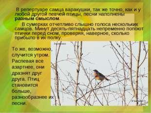 В репертуаре самца варакушки, так же точно, как и у любой другой певчей птиц