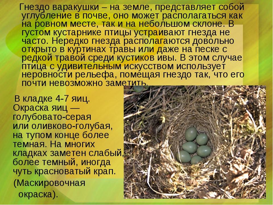 Гнездо варакушки – на земле, представляет собой углубление в почве, оно може...