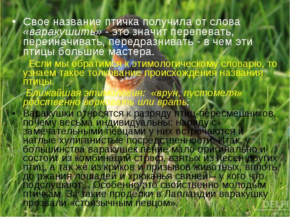 Свое название птичка получила от слова «варакушить» - это значит перепевать,...