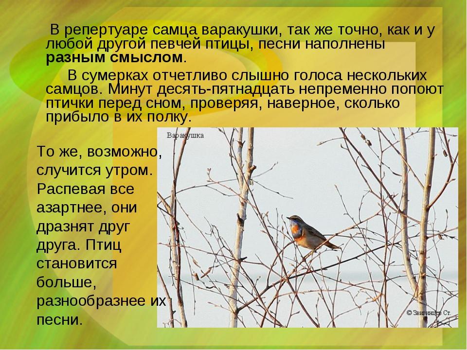 В репертуаре самца варакушки, так же точно, как и у любой другой певчей птиц...
