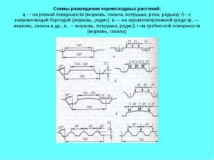 Схемы размещения корнеплодных растений: а — на ровной поверхности (морковь, с