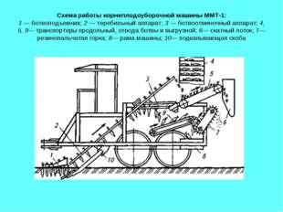 Схема работы корнеплодоуборочной машины ММТ-1: 1 — ботвоподъемник; 2 — тереби