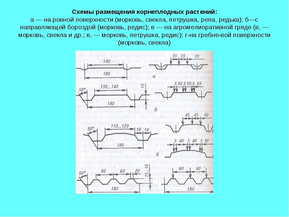 Схемы размещения корнеплодных растений: а — на ровной поверхности (морковь, с...