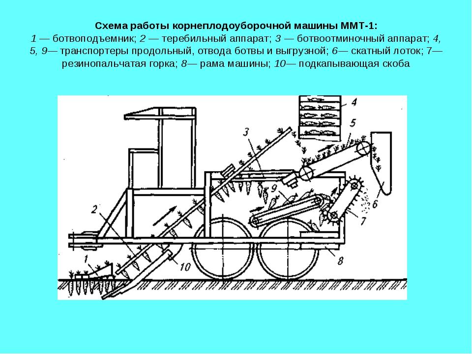 Схема работы корнеплодоуборочной машины ММТ-1: 1 — ботвоподъемник; 2 — тереби...