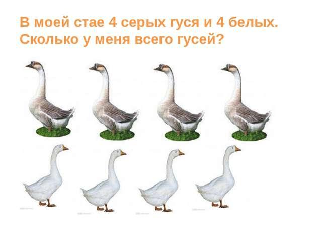 В моей стае 4 серых гуся и 4 белых. Сколько у меня всего гусей?