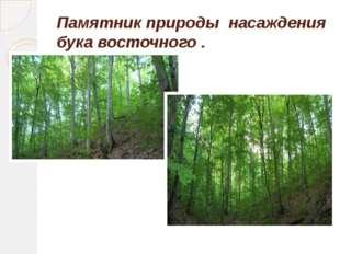 Памятник природы насаждения бука восточного .