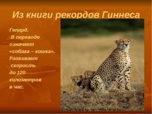 Из книги рекордов Гиннеса Гепард. В переводе означает «собака – кошка». Разви