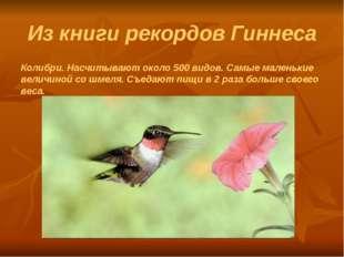 Из книги рекордов Гиннеса Колибри. Насчитывают около 500 видов. Самые маленьк
