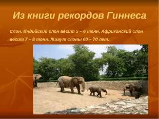 Из книги рекордов Гиннеса Слон. Индийский слон весит 5 – 6 тонн, Африканский
