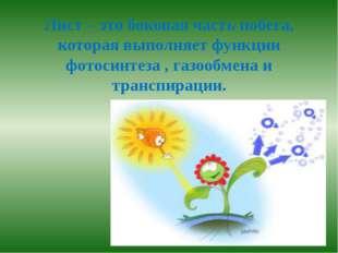 Лист – это боковая часть побега, которая выполняет функции фотосинтеза , газо