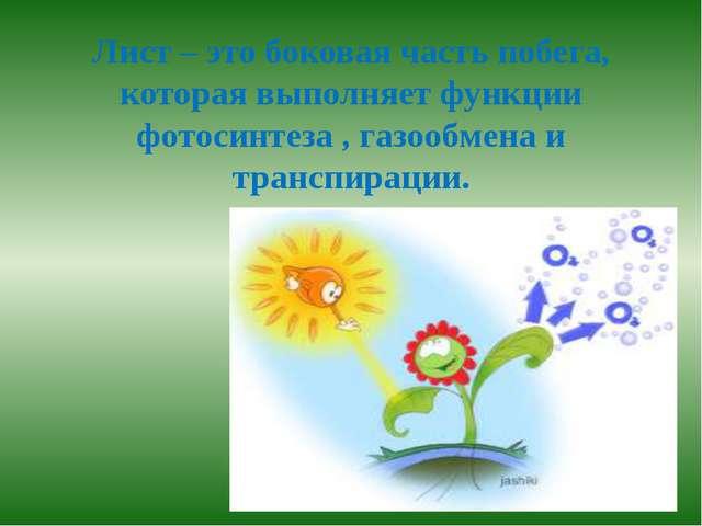 Лист – это боковая часть побега, которая выполняет функции фотосинтеза , газо...