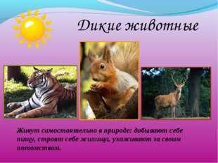 Дикие животные Живут самостоятельно в природе: добывают себе пищу, строят се