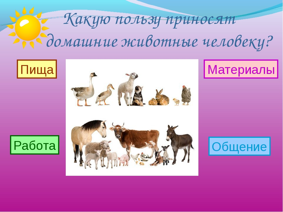 Какую пользу приносят домашние животные человеку? Пища Работа Материалы Обще...