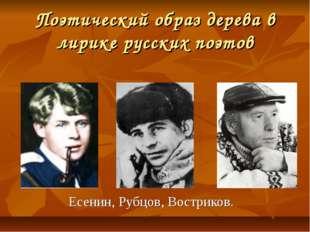 Поэтический образ дерева в лирике русских поэтов Есенин, Рубцов, Востриков.