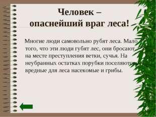 Человек – опаснейший враг леса! Многие люди самовольно рубят леса. Мало того,