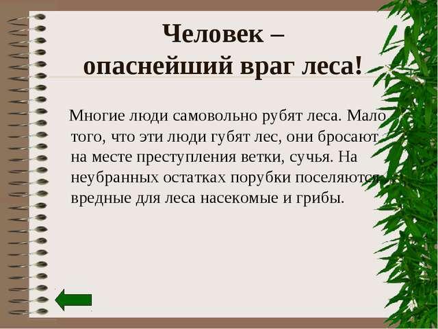 Человек – опаснейший враг леса! Многие люди самовольно рубят леса. Мало того,...