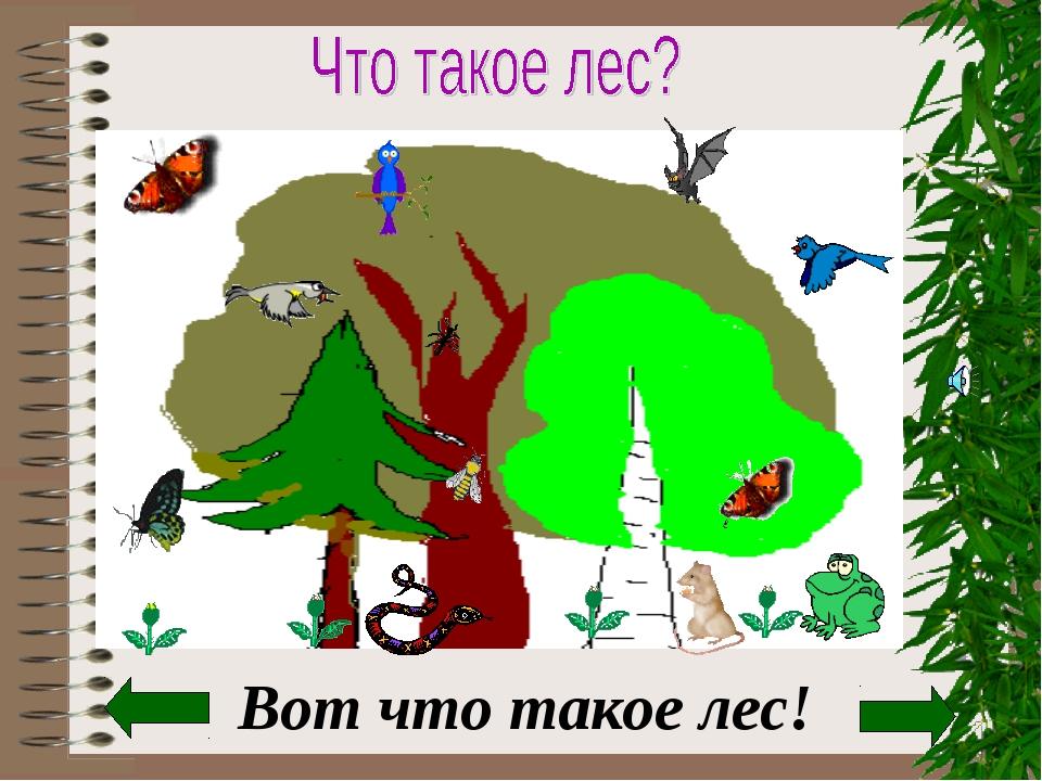 Вот что такое лес!