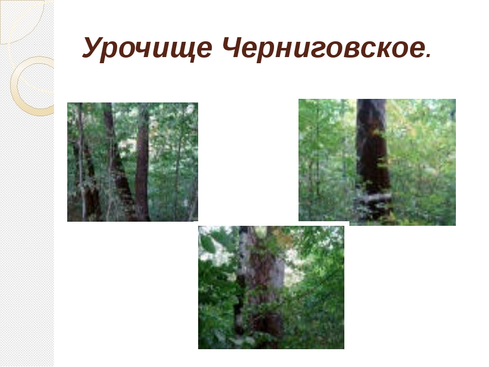 Урочище Черниговское.