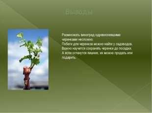 Выводы Размножать виноград одревесневшими черенками несложно. Побеги для чере