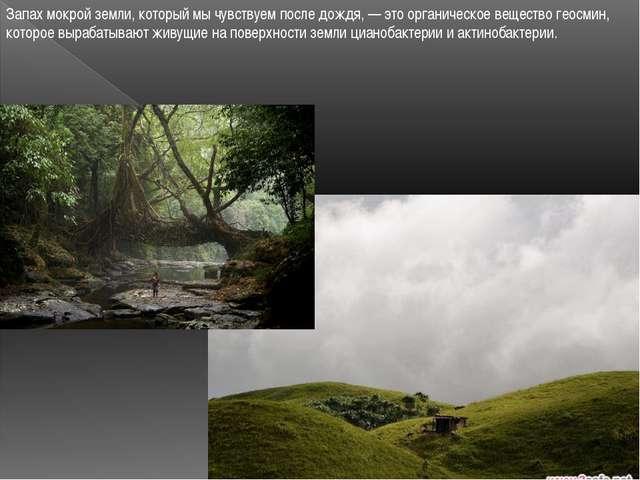 Запах мокрой земли, который мы чувствуем после дождя, — это органическое веще...