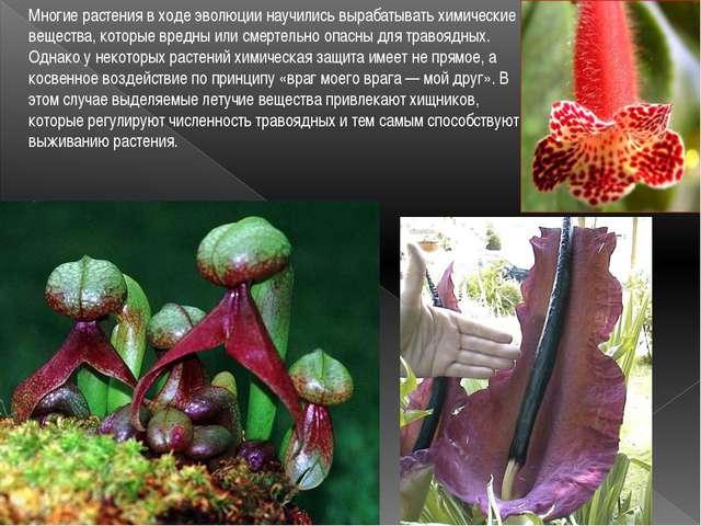 Многие растения в ходе эволюции научились вырабатывать химические вещества, к...