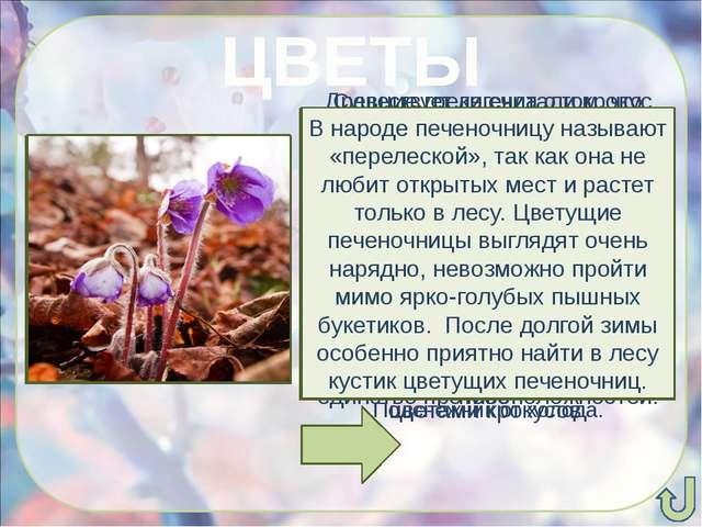 ЦВЕТЫ Существует легенда о том, что богиня Флора, раздавая цветам наряды для...