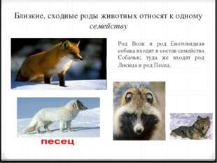 Близкие, сходные роды животных относят к одному семейству Род Волк и род Ено