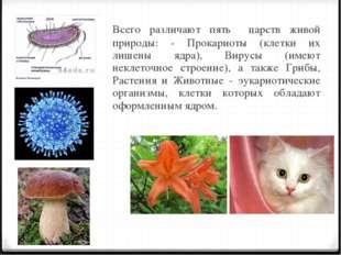 Всего различают пять царств живой природы: - Прокариоты (клетки их лишены яд