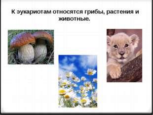 К эукариотам относятся грибы, растения и животные.