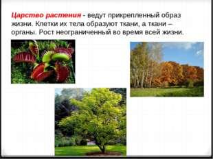 Царство растения - ведут прикрепленный образ жизни. Клетки их тела образуют т