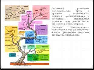 Организмы различных систематических групп в процессе исторического развития,