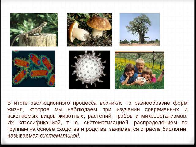 В итоге эволюционного процесса возникло то разнообразие форм жизни, которое...