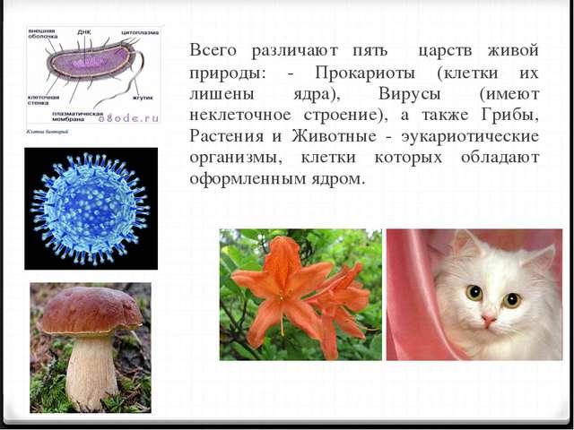 Всего различают пять царств живой природы: - Прокариоты (клетки их лишены яд...