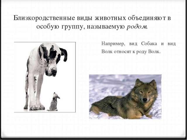 Близкородственные виды животных объединяют в особую группу, называемую родом....